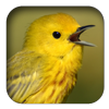 link to Yellow Warbler sound