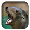 link to California Sea Lion sound
