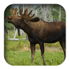link to Moose sound